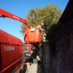 Genthod: destruction de plantes envahissante et décorations de Noël